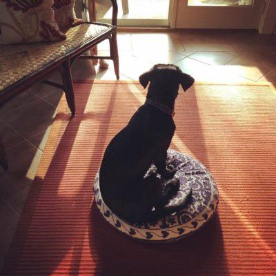 Puppy on meditation cushion